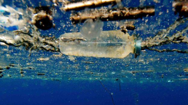 Бактерии для переработки мусора