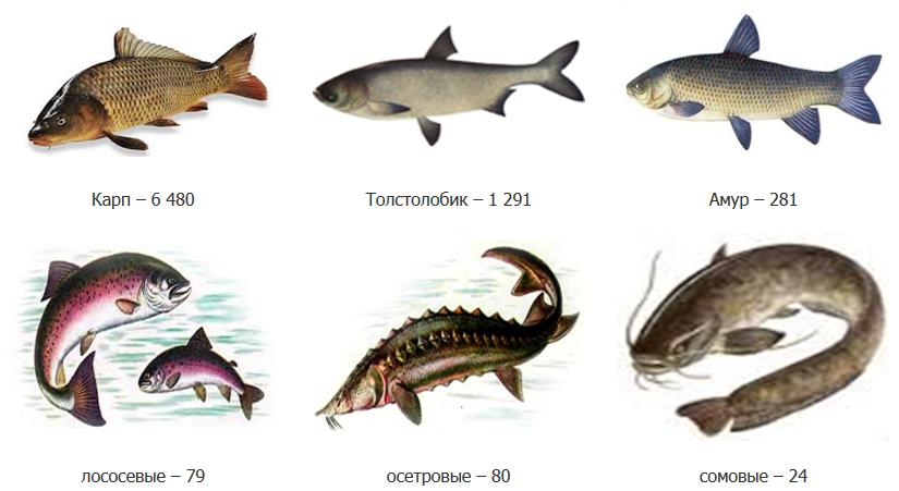 невероятная речные рыбы беларуси фото с названиями знак окей смайл