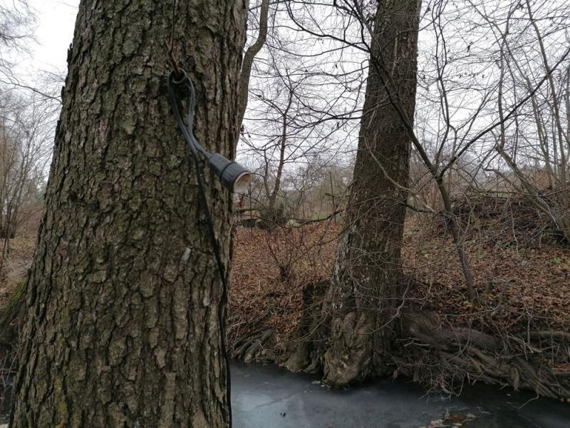Розетка для электронасоса на стволе дерева