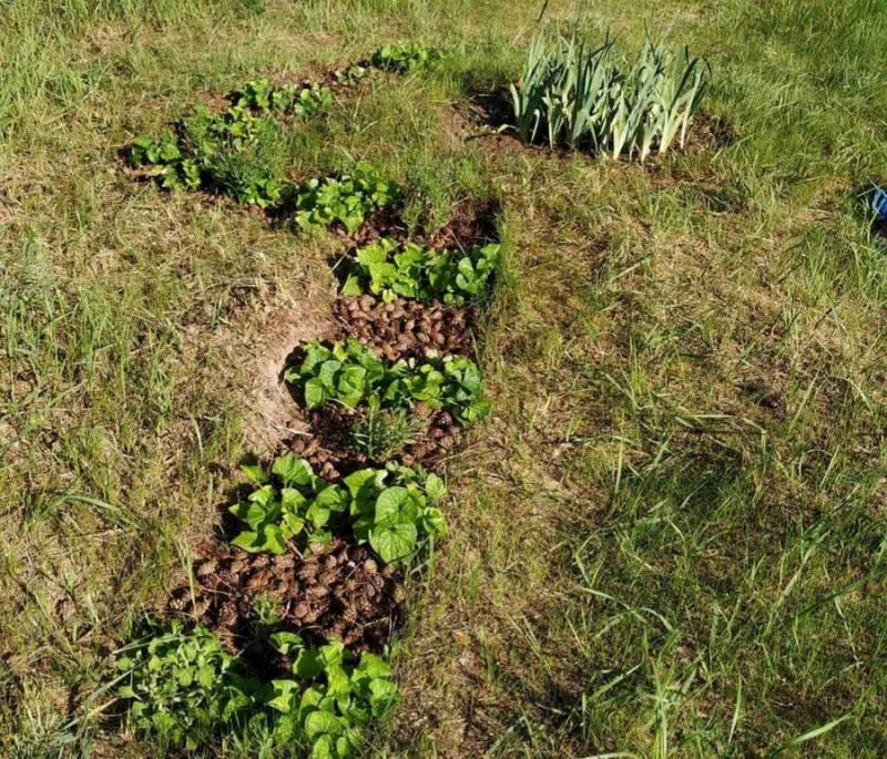 «Овощи на соломе вырастают отменные». Как брестчане сделали грядки, не вскапывая дёрн