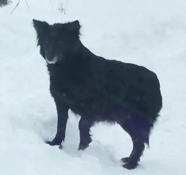 Если вы видели эту собаку в Колодищах, обращайтесь в «Фортуну». Её очень ждут