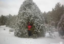 Работы конкурса «Здравствуй, дерево!»