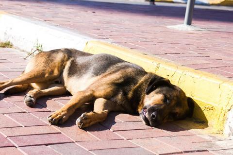 Как не убивать уличных котов и собак? Примеры есть