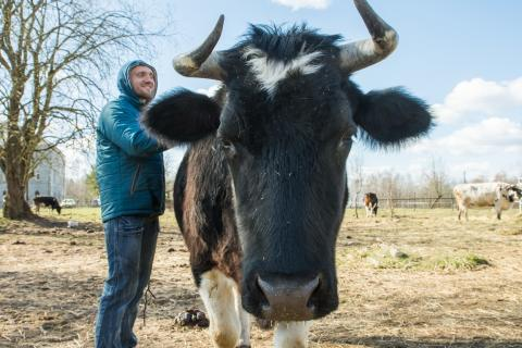 Фермеры-кришнаиты собирают на трактор. Коровья ферма на принципах ненасилия объявила краудфандинг