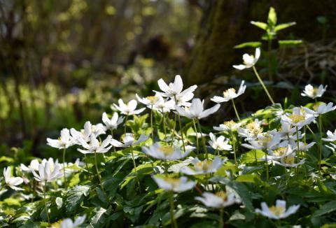 Весна! Фотопрогулка по лесопарку
