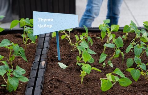 На крыше офиса A1 посадили клубнику, арбузы и картофель. Как прошло открытие городского огорода