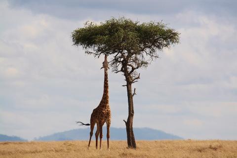 Возможно, этих животных не будет уже к концу века