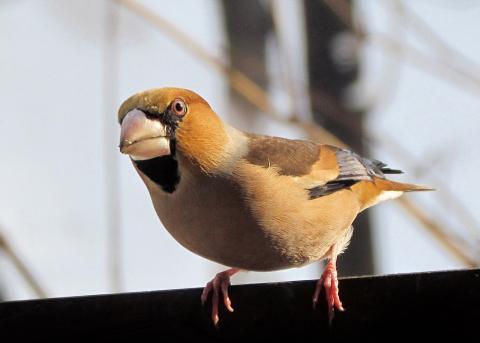 Выключайте вечером свет – это спасает перелётных птиц