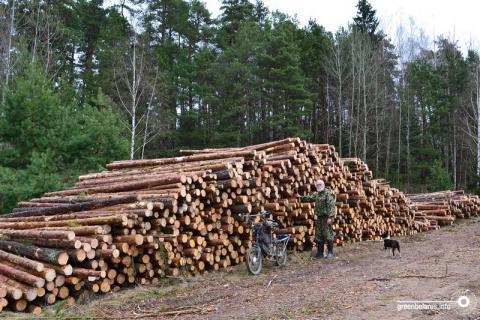 Потери безвозвратны? Что говорят эксперты о вырубке лесов в Беларуси