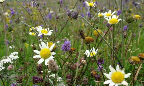 Жизнь привлекает жизнь. Как ирландские фермеры вернули на поля пчел и бабочек