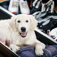 Собакам и кошкам в Америке разрешили летать первым классом