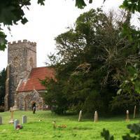 Дерево в возрасте 4000 тысяч лет погибает в Англии