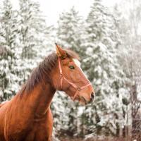 «Самые счастливые минуты для меня – это время, проведенное с Белкой». Как могилевчанка спасла лошадь от убоя