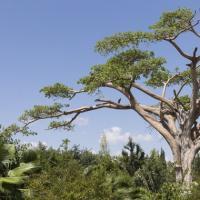 В Эфиопии за день посадили более 350 миллионов деревьев, чтобы бороться с изменением климата