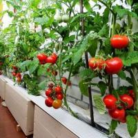 Накормить всех: сити-фермерство, модифицированная еда и умное орошение