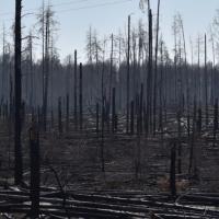 Как благодаря пандемии в Украине осознали опасность пала травы