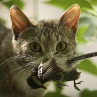 Оттачивая охотничий инстинкт. Как бездомные животные вредят дикой природе