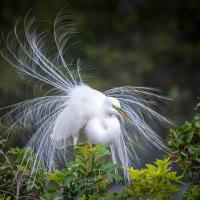 Чудо в перьях. Галерея классных птиц