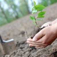 В Украине за один день высадят миллион деревьев