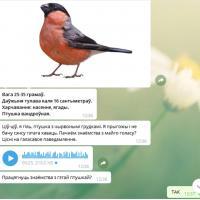 Беларусские птицы завели еще и чат-бот в Telegram. Кажется, вы нас потеряли