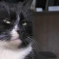 Из мешка в замминистры. Спасенный на cортировке мусора в России кот сделал стремительную карьеру