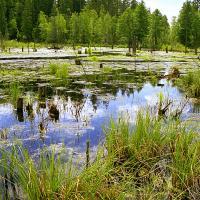 Заказник «Бобровина» стал первым из 6 создаваемых на Брестчине особо охраняемых природных территорий