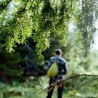 Как выжить в беларусском лесу? Советы горожанам