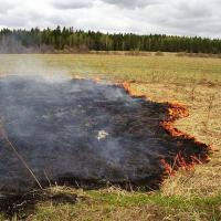 Уже горит. Природные пожары в Беларуси начались на месяц раньше, чем в прошлом году