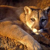«Замороженный зоопарк» даст шанс выжить исчезающим видам животных