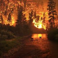 Минприроды России предложило сократить территории, где лесные пожары не тушат