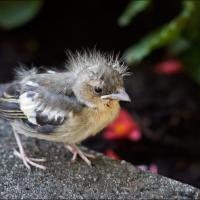 Птенцы учатся летать и падают с деревьев. Не забирайте их в квартиру!