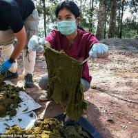 У погибшего в Таиланде оленя обнаружили семь кг пластика в желудке