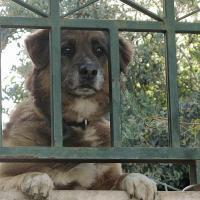 В Израиле впервые пойдут под суд граждане, бросившие собак
