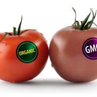 В Беларуси содержание более 0,9% ГМО в продукте будет указываться на упаковке