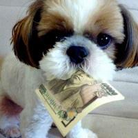 Заплати налог на собаку и не задавай лишних вопросов. Куда идут деньги от домашних питомцев?