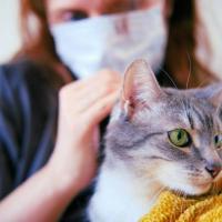 Тесты двух домашних кошек в Нью-Йорке дали положительный результат на Covid-19
