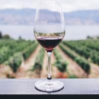 Изменения климата меняют карту европейских вин