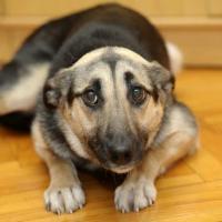 Китайская полиция выставила на аукцион слишком робких служебных собак