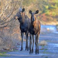 Аномально теплая зима понравилась животным в Чернобыле