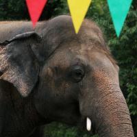 Трогательный момент встречи «самого одинокого слона в мире» с сородичами попал на фото