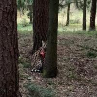 Под Минском заметили самого дорогого кота в мире. Хозяев рядом не было
