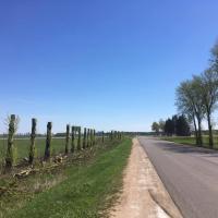Фотофакт. Деревья вдоль дороги на Минск обрезали на столб
