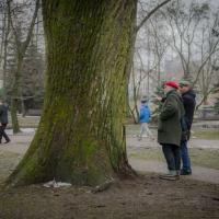 Озеленение по поручению. Почему с деревьями и травой не работают командно-административные методы