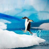 Гигантский айсберг погубил 150 тысяч пингвинов