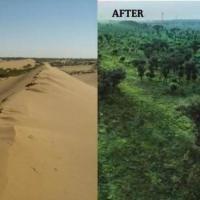 Китайскую пустыню за 60 лет превратили в оазис