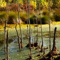 Устойчивое развитие болот: что поменяется с новым постановлением Совмина о торфяниках?
