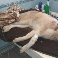 Убийство собаки оценили в двадцать базовых