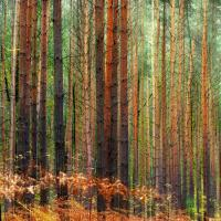 «Мы стараемся вовлечь общественность в работу лесохозяйственных предприятий»