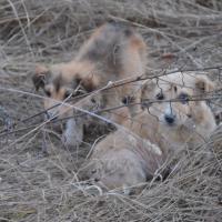 Отлов животных в Вилейке: активисты договорились с ЖКХ и получат доступ к вольерам