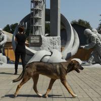 Собаки Чернобыля: как волонтеры со всего мира помогают бездомным животным в зоне отчуждения